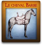 Le cheval Barbe